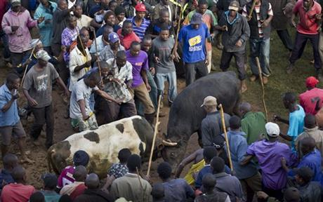 Kenya Bullfight