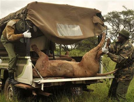Kenya Lions Killed