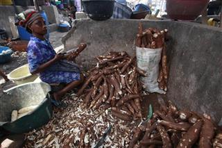 Nigeria Cassava Killer