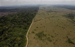 Brazil Deforestation