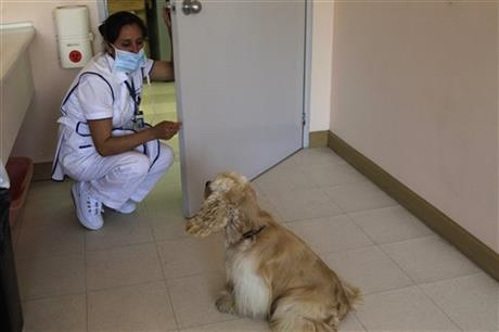 Ecuador Therapy Dogs