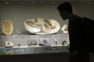 Trilobites Exhibit