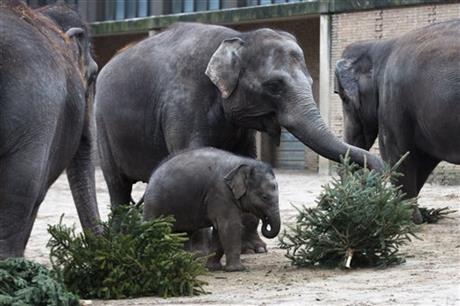 Germany Christmas Tree Feeding