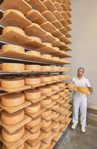 All Cheese