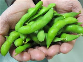 Food and Farm - American Edamame