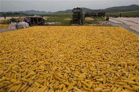 North Korea Stunted Harvest