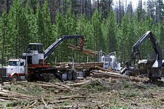 Logging 