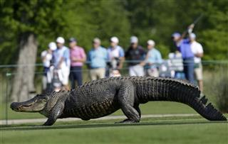 Zurich Classic Golf