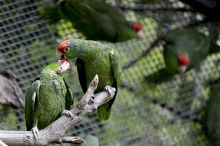 Protecting Parrots