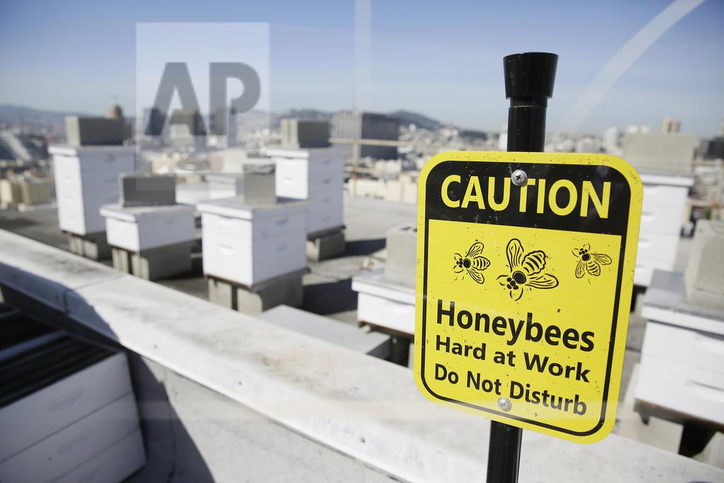 Hotel Bees