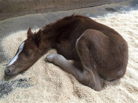 Baby Horse Recovering
