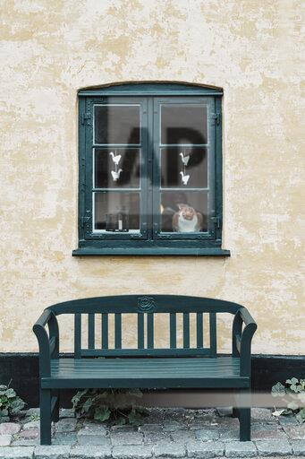 Denmark, Dragor, cat looking out of window of residential house