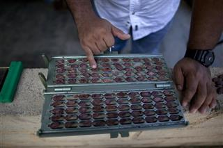Venezuela Chocolate Entrepreneurs