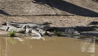 South Africa Crocs on the Loose