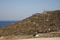 In this Thursday , Aug. 9, 2018, photo goats stand in front of electric poles on the Aegean island of Tilos, Greece. Tilos with its winter population of 400 and summer population of some 3000, will become the first island in the Mediterranean to run exclusively on wind and solar power when the blades of the 800 kilowatt wind turbine start turning. (AP Photo/ Iliana Mier)