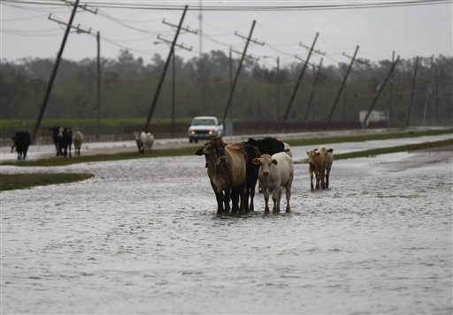 Isaac Flooded Cattle Ranchers