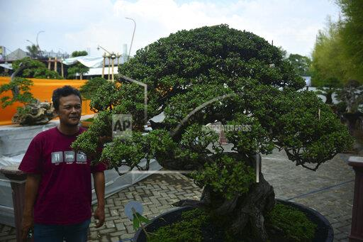 Indonesia: Bonsai Contest in East Java