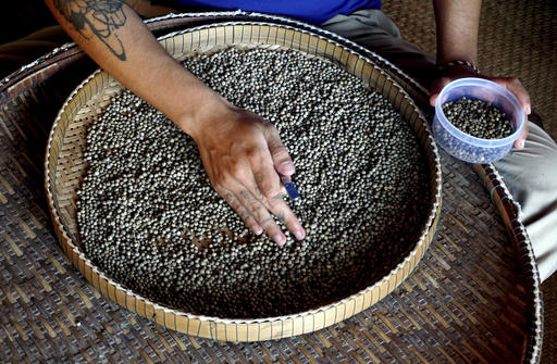 "Cambodia's ""perfect pepper"" conquering world's taste buds"