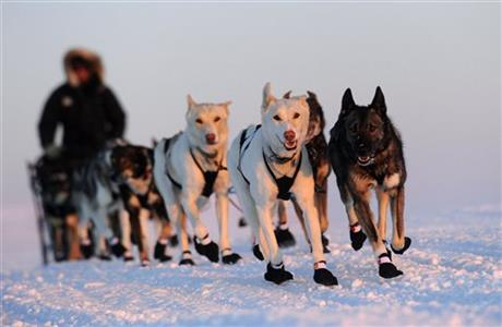 2011 Iditarod Sled Dog Race