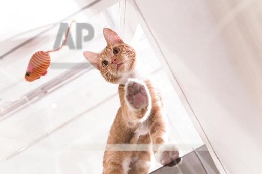 Cats on Glass Gallery