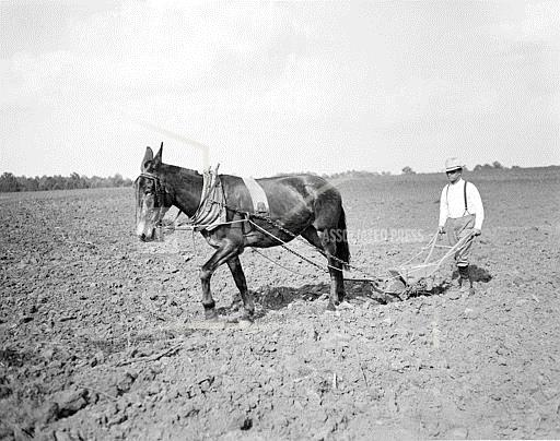 Watchf Associated Press Domestic News  Georgia United States APHS100699 Governor Tries Planting Cotton 1935