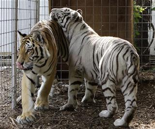Exotic Animals Crackdown