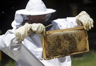 Croatia Bees Vs Mines