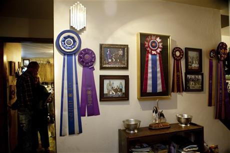Dog Show Breeders