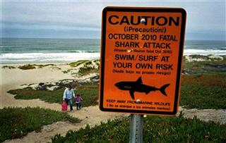 Fatal Shark Attack