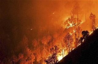 India Forest Fires