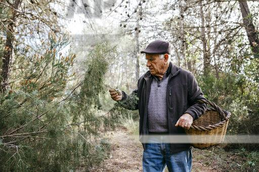 Senior man with basket in the forest examining tree