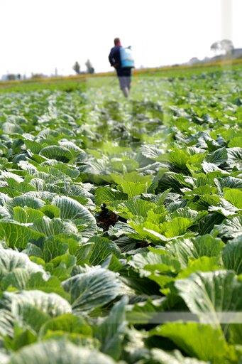 CHINA CHINESE JIANGSU AGRICULTURE VEGETABLE BASE FARM FIELD