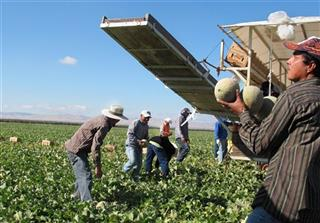 Immigration Overhaul-Farmworkers