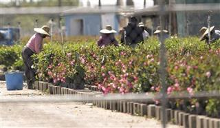 Farm Workers Immigration Reform