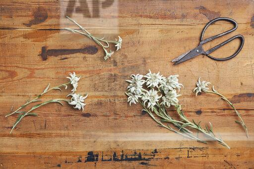 Edelweiss and scissors on wood
