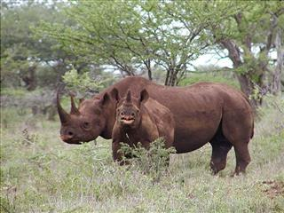 Black Rhino Hunter