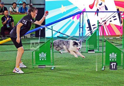 TopPho AP I  Shanghai China TPOHP A pet dog's sports meeting was held at the 22th Asia pet show in Shanghai,China on 21th August, 2019