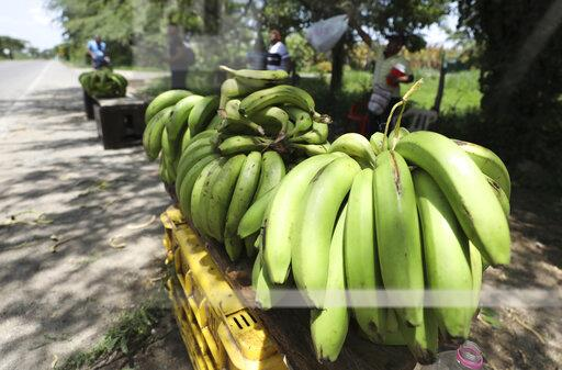 Colombia Bananas At Risk