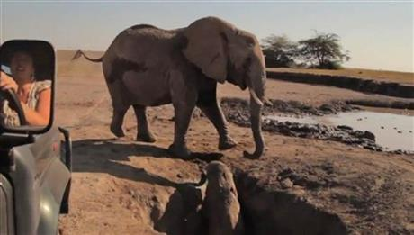 Kenya Elephant Rescue