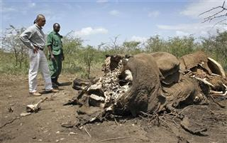 Tanzania Elephant Slaughter