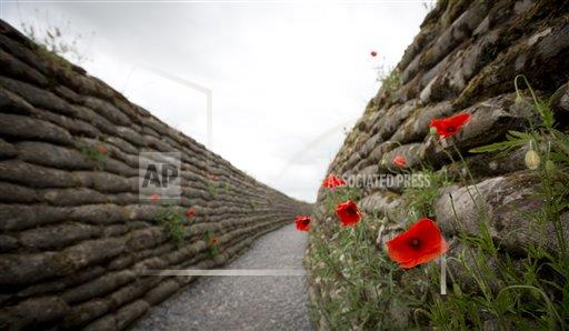 Belgium World War I Trench Poppy