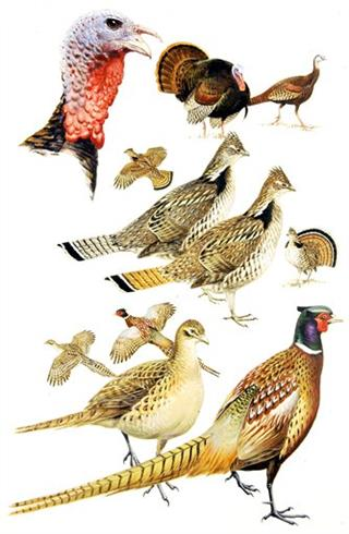 Bird Field Guides Auction