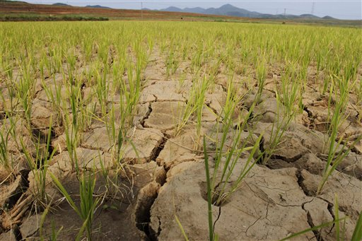 Koreas Drought