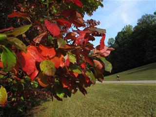 Southeast Fall Foliage