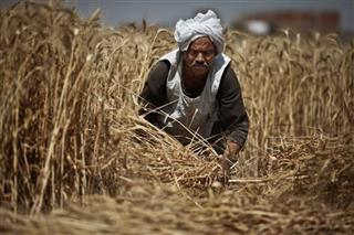 Mideast Egypt Wheat Politics