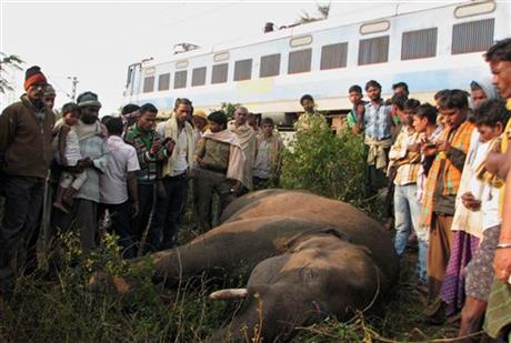 India Elephants Killed