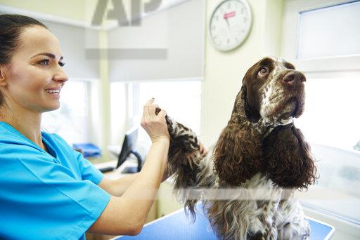 Dog giving paw to female veterinarian in veterinary surgery