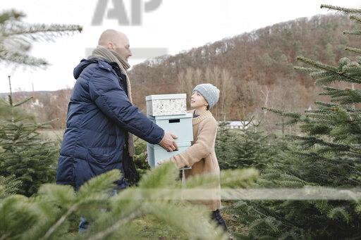 Father and son carrying gift boxes on a Christmas tree plantation