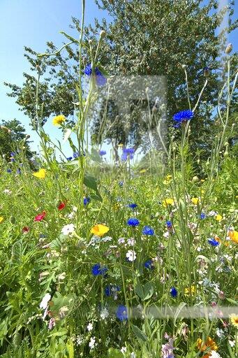 Wildflower bed in Schleswig