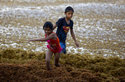 In this Sunday, Aug. 5, 2018 photo, children play on the beach full of sargassum in Bahia La Media Luna, near Akumal in Quintana Roo state, Mexico. A Mexican environmental agency is constructing barriers at sea just beyond its famed Riviera Maya beaches to decrease the massive amounts of sargassum washing up onshore. (AP Photo/Eduardo Verdugo)